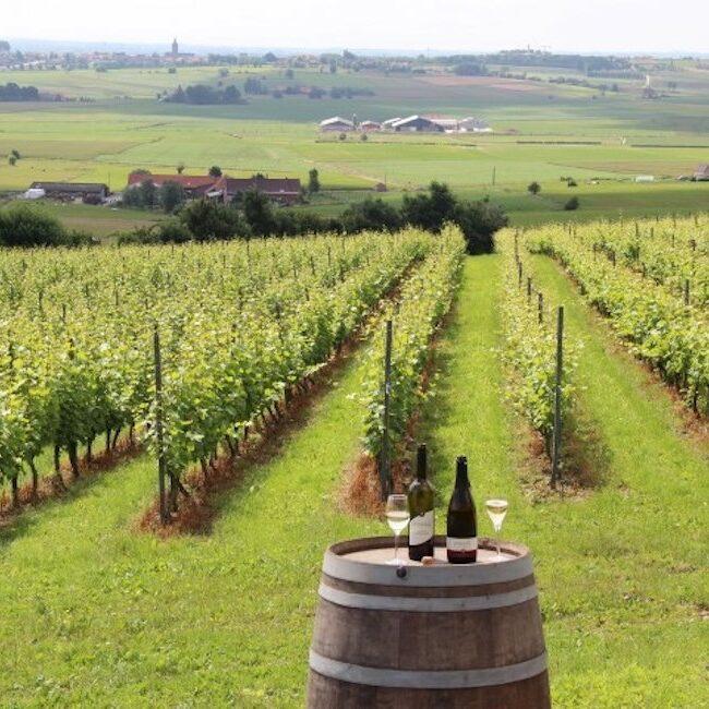 Wijn Monteberg